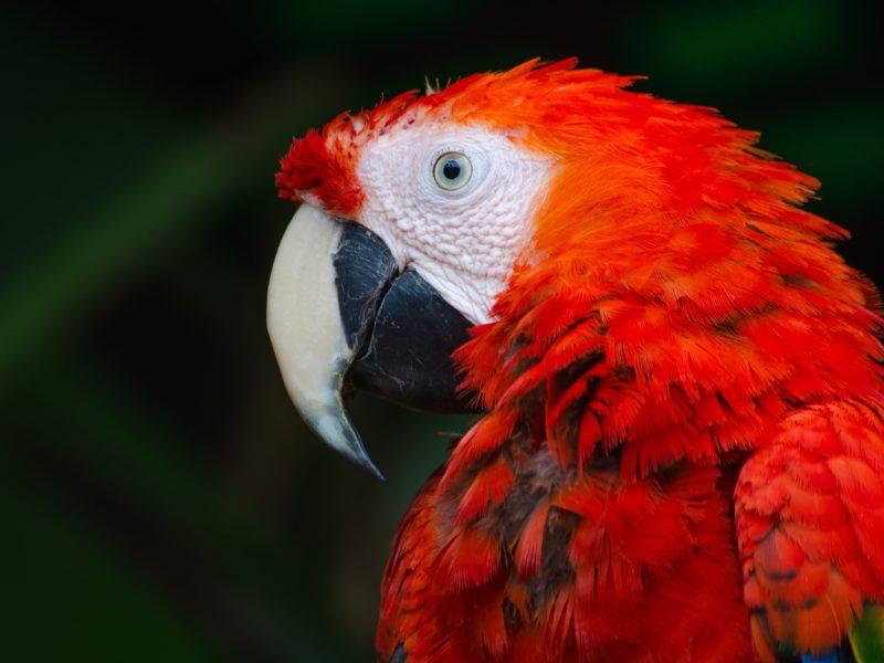 Activists not parrots